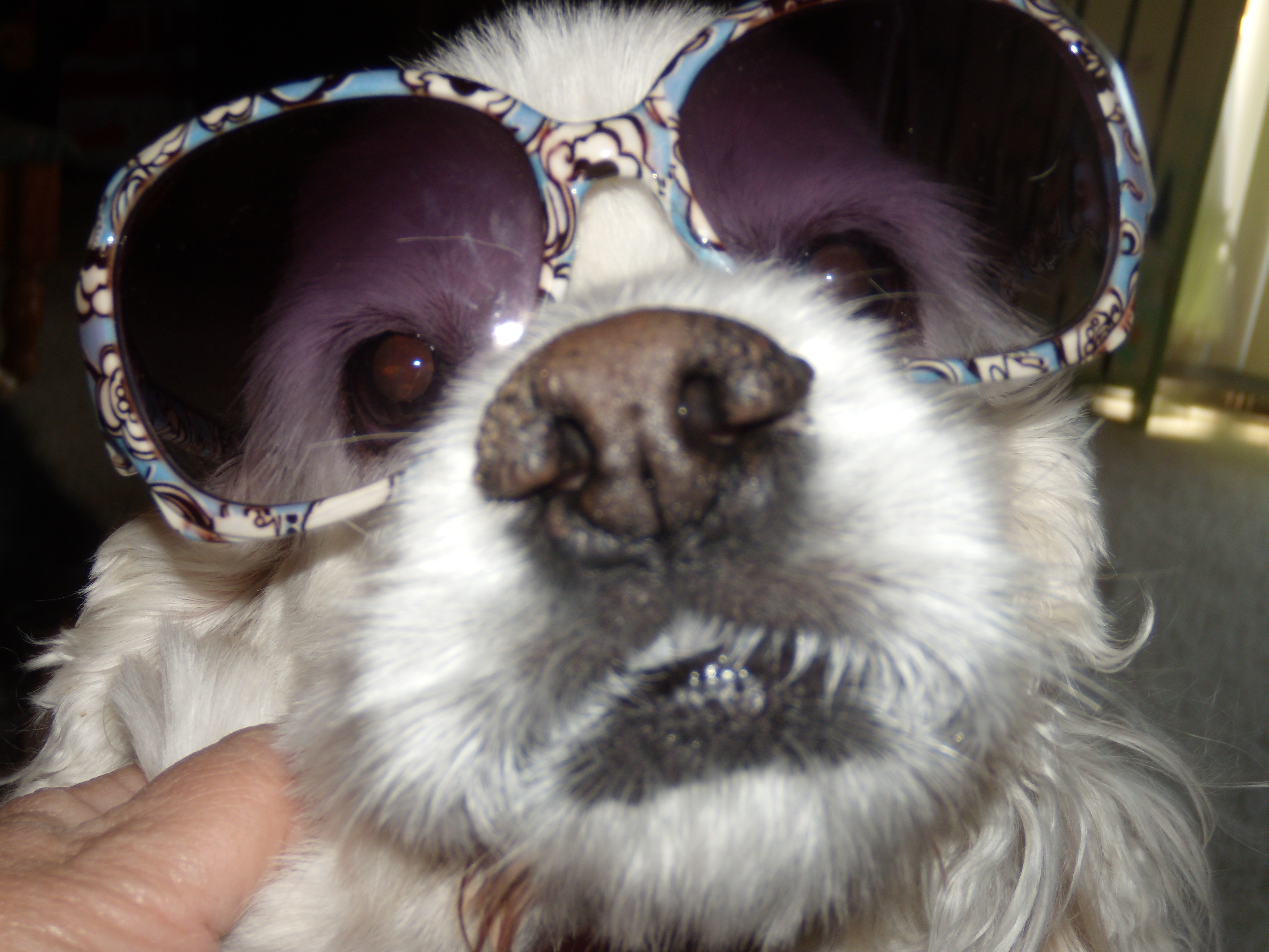 chloe-sunglasses1-6caf85ee4dd65e8f2ee3ff3783509e7d6b170884