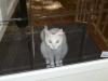 reynoldsburg-animal-hospital-contact_5263050671_l