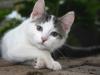 veterinary-reynoldsburg-023_5089508939_l