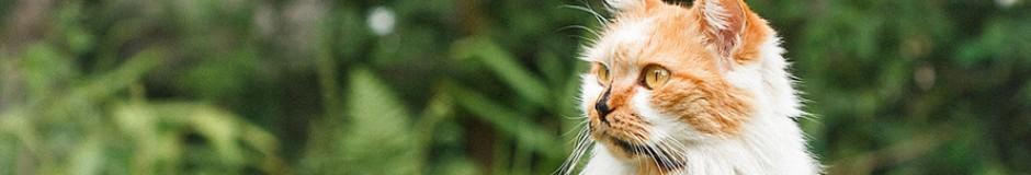 cropped-mast-kitty-orange