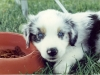 reynoldsburg-animal-hospital-contact_5259231691_l
