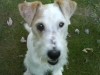 reynoldsburg-animal-hospital-contact_5370764333_l