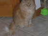 reynoldsburg-animal-hospital-contact_5371389148_l