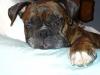 reynoldsburg-animal-hospital-contact_5741421915_l